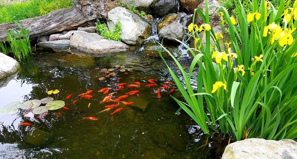 Feeding pond fish in the winter