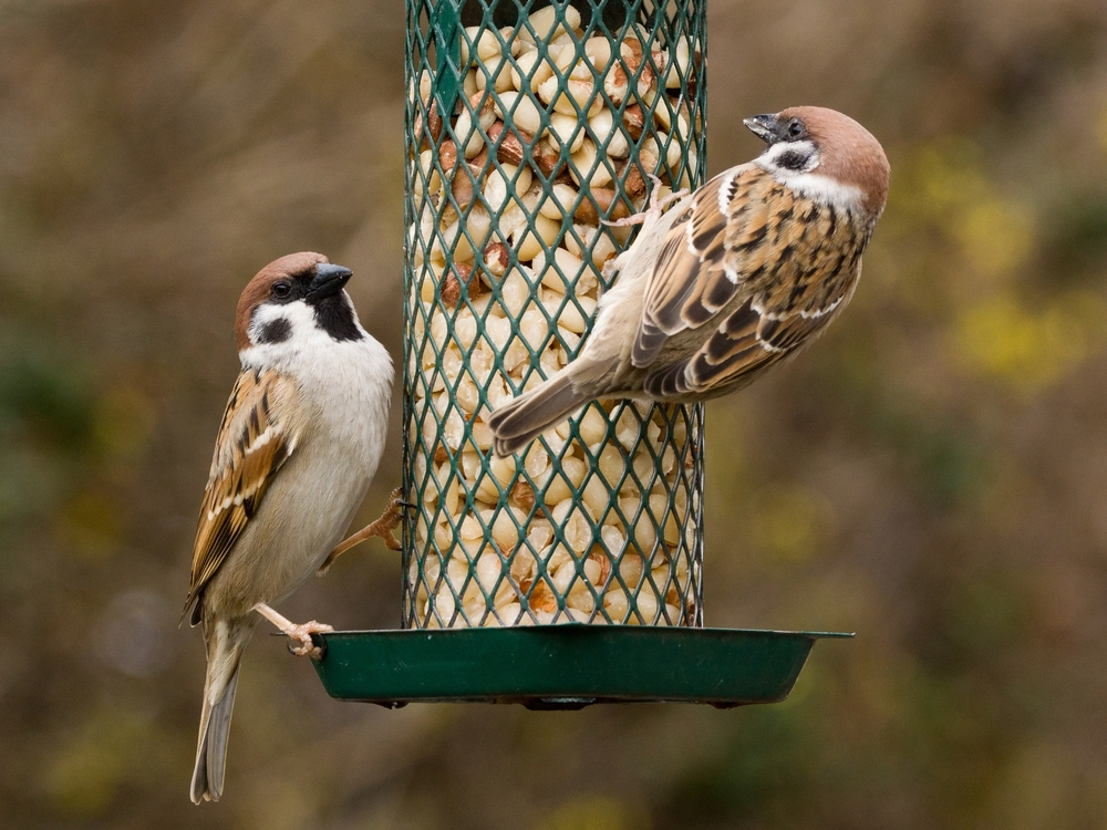 make-your-own-bird-food