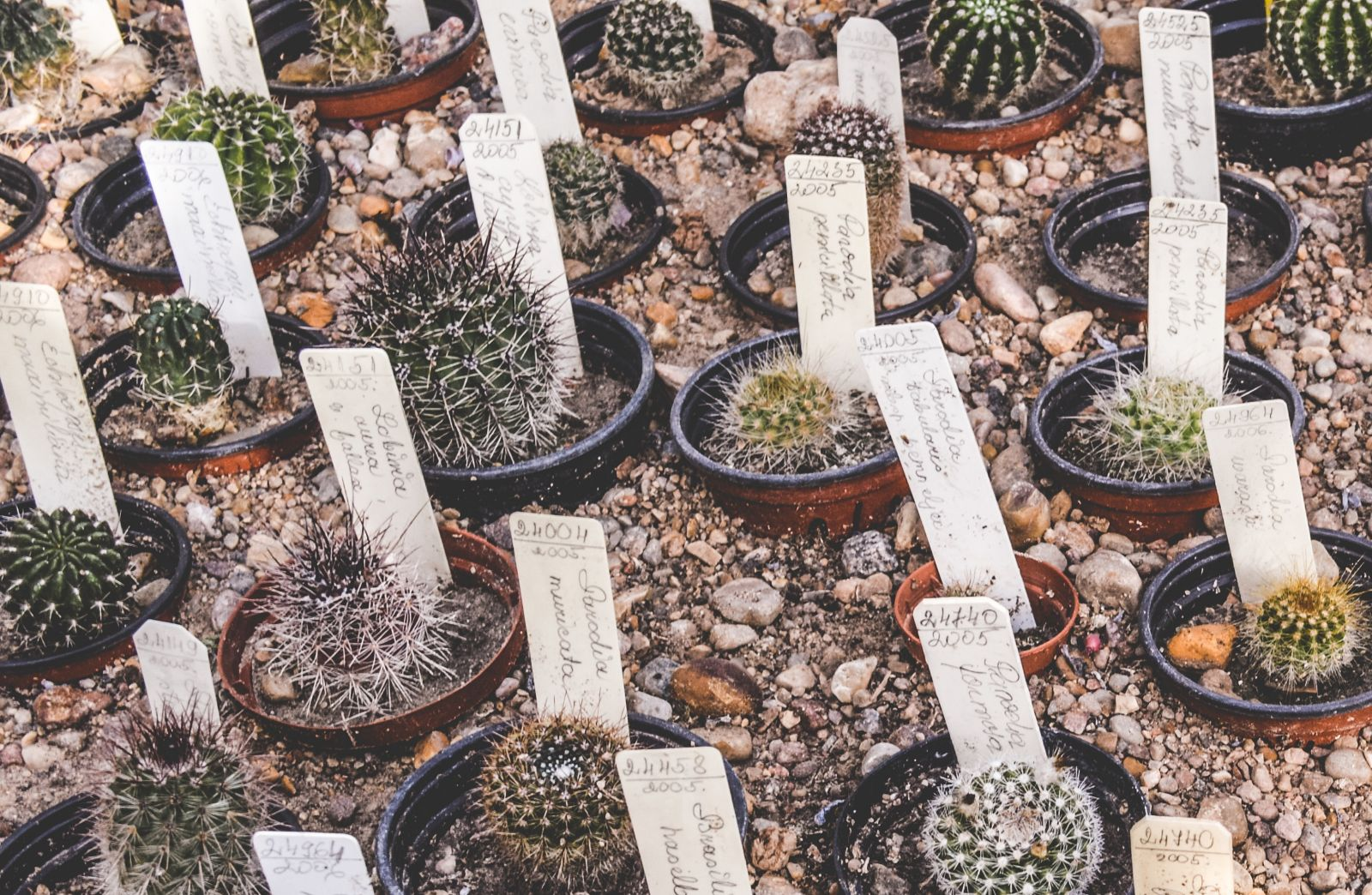 Cactus with cards