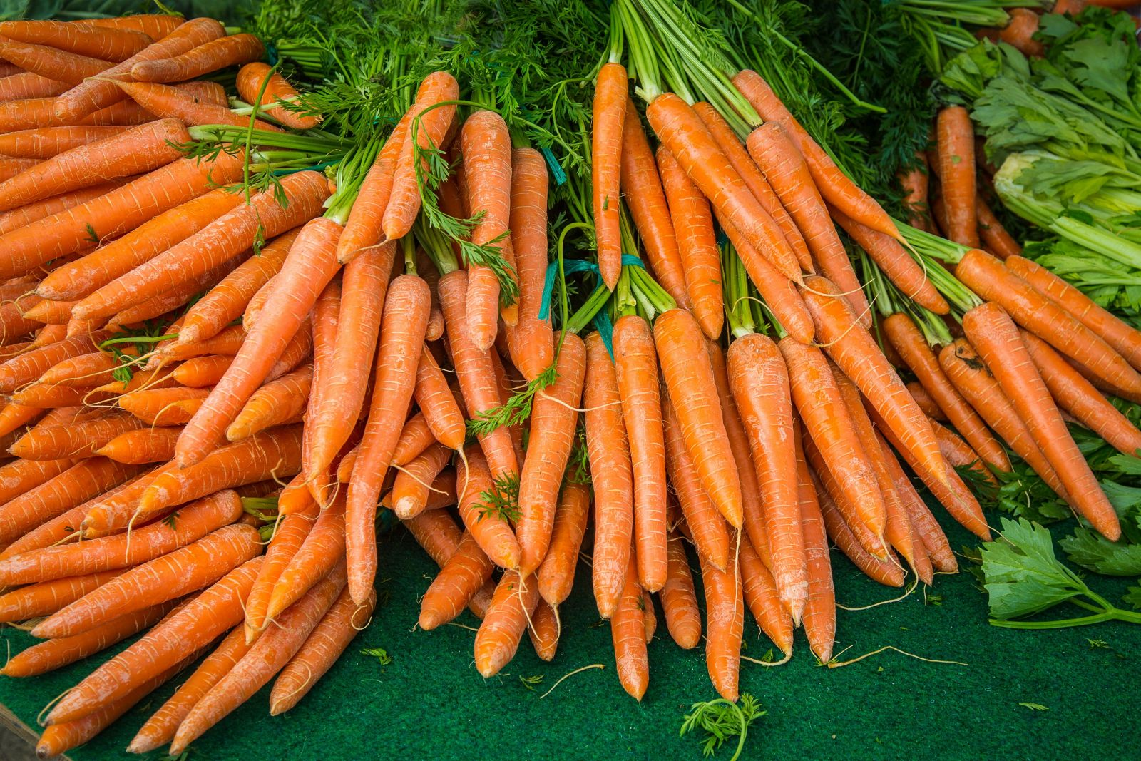 growing carrots in your veggie garden