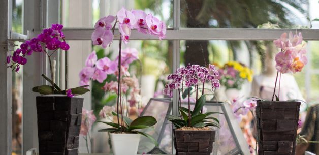Keep-Your-Orchid-Healthy