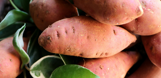 Growing-sweet-potatoes-in-the-uk