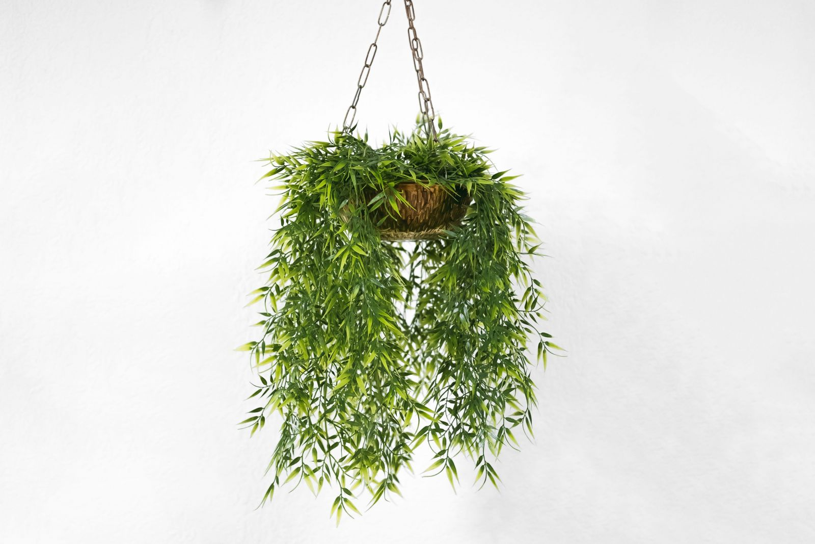 Green trailing fern in brown basket